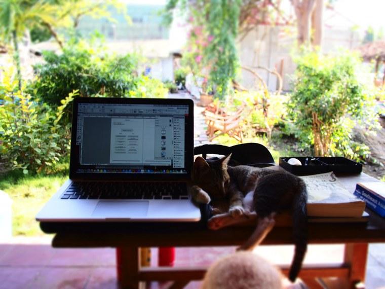 19.Myanmar_Inle_Lake_Cat_Computer