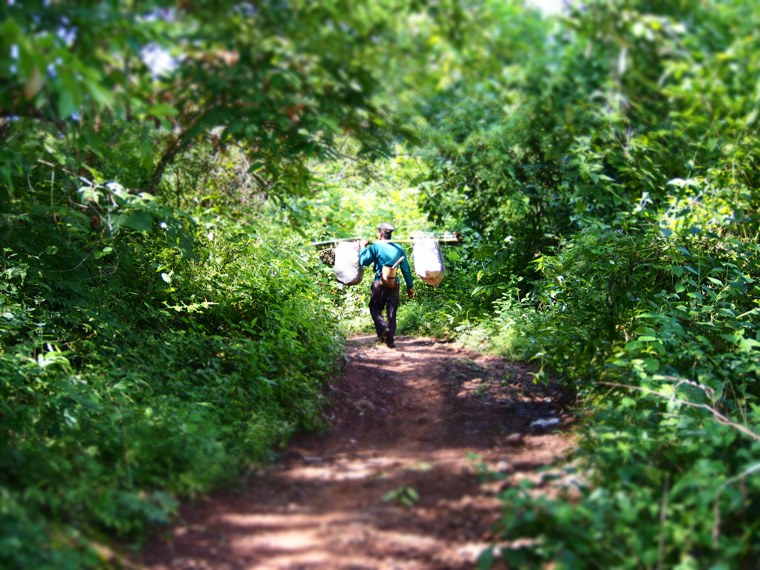 8.Myanmar_Hsipaw_Forest_trail