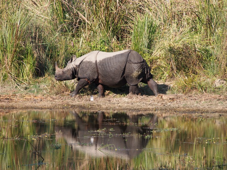 10.Nepal_Chitwan_National_Park